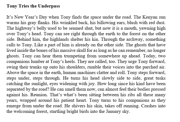 """A screenshot of """"Tony Tries the Underpass,"""" a prose poem by Brittney Corrigan. The margins are justified and the poem is formatted into a square-like paragraph. The poem reads: Tony Tries the Underpass It's New Year's Day when Tony finds the space under the road. The Kenyan sun warms his gray flanks. His wrinkled back, his billowing ears, blush with red dust. The highway's belly used to be seamed shut, but now it is a mouth, yawning high over Tony's head. Tony can see right through the earth to the forest on the other side. Behind him, the highlands shelter his kin. Through the archway, something calls to Tony. Like a part of him is already on the other side. The ghosts that have lived inside the bones of his massive skull for as long as he can remember, no longer ghosts. Tony can hear them trumpeting from somewhere up ahead. Today, two companions lumber at Tony's heels. They are called, too. They urge Tony forward, swing their trunks up onto his shoulders, rumble their voices into the parched air. Above the space in the earth, human machines clatter and roll. Tony steps forward, steps under, steps through. He turns his head slowly side to side, great tusks catching the sunlight, eyes widening with joy. How long since his kind have been separated by the road? He can smell them now, can almost feel their bodies pressed against his. Reunion. That's what's been sitting between his ribs all these many years, wrapped around his patient heart. Tony turns to his companions as they emerge from under the road. He shivers his skin, takes off running. Crashes into the welcoming forest, startling bright birds into the January sky."""